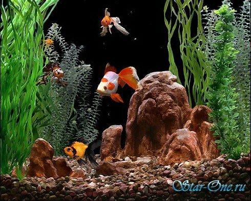 Goldfish Aquarium 2 (русская версия)